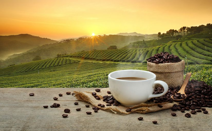 coffee-production-sustainable-ecological