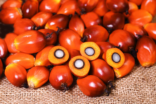 palm oil production produced investigation product fruit.