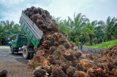 palm oil production traders produced investigation product