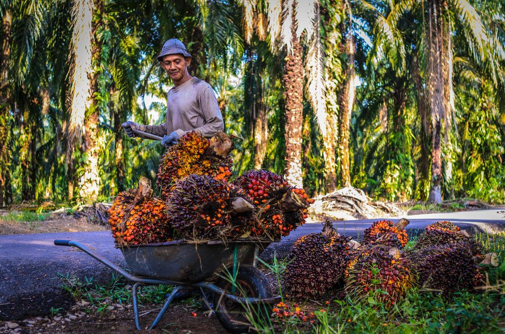 production palm oil people planet