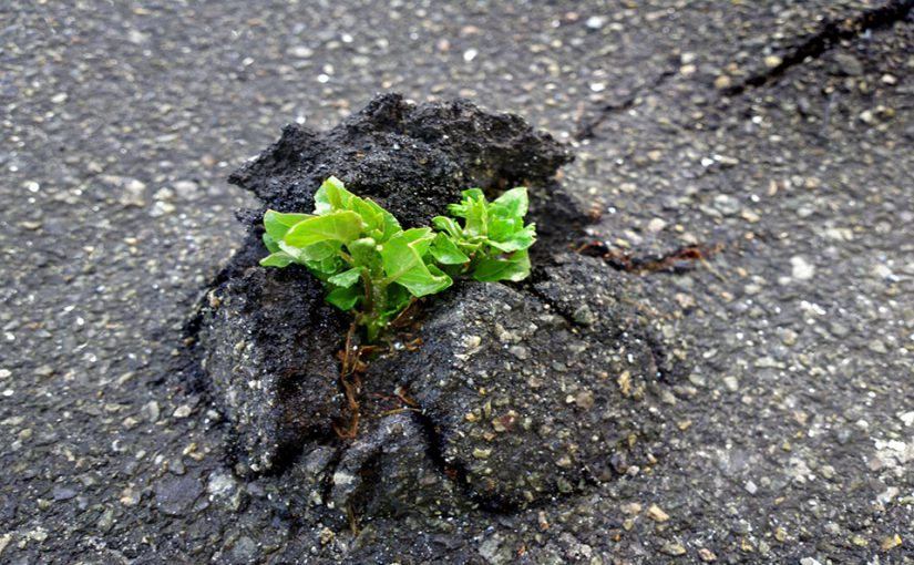 Resilience Definition and Meaning - Urban Business Psycholo