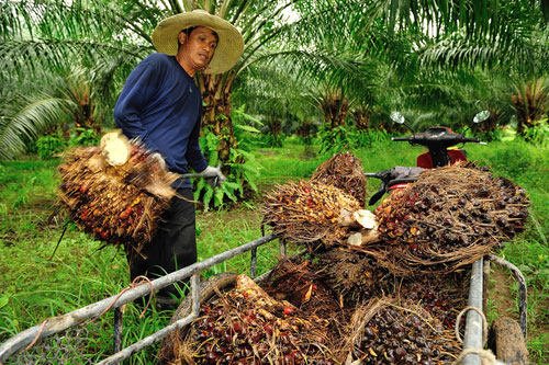 worker palm oil production