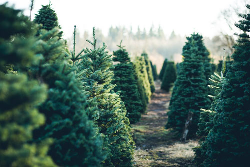 artificial natural Christmas tree ecological
