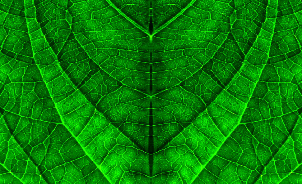 biomimicry definition examples