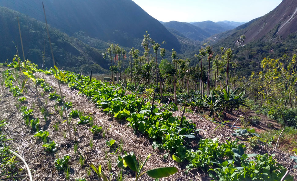 agroecology definition