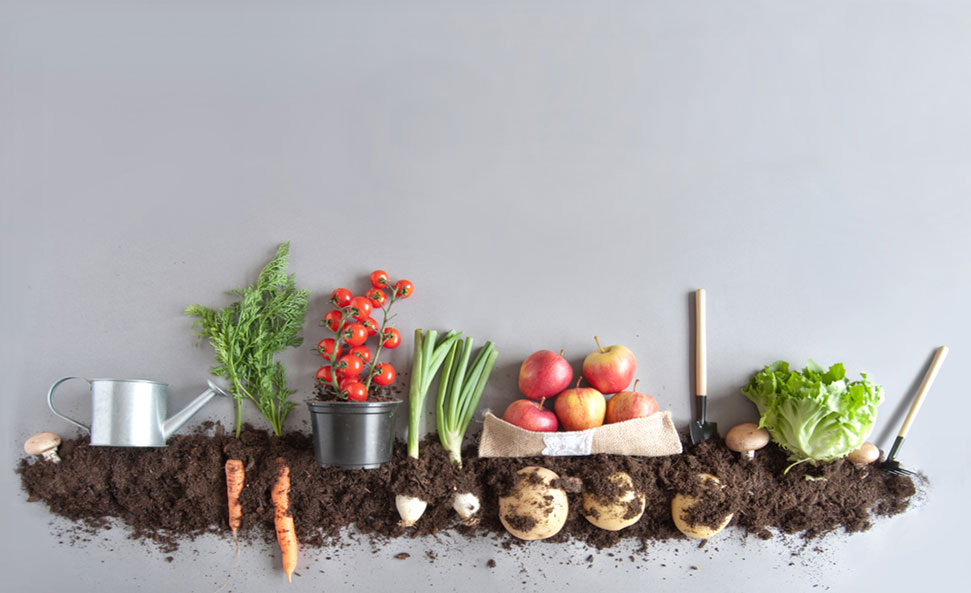 definitions/organic-farming-definition-examples