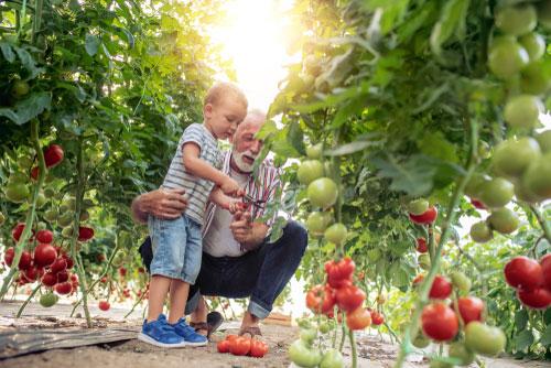 organic farming pesticides
