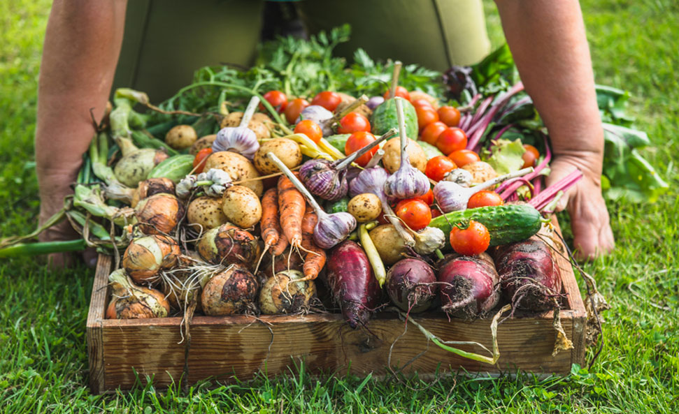 regenerative agriculture sustainability