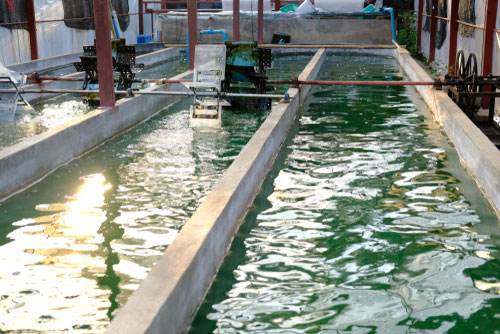 microalgae production sustainability