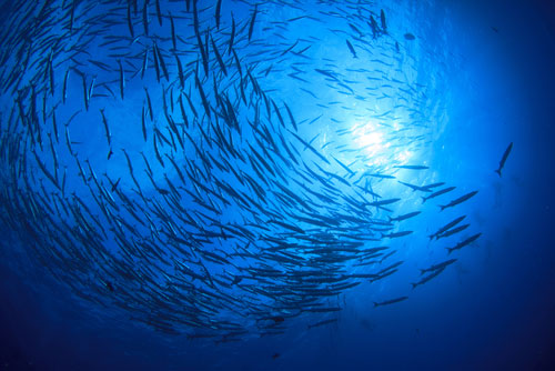 ocean protection sustainable fishing