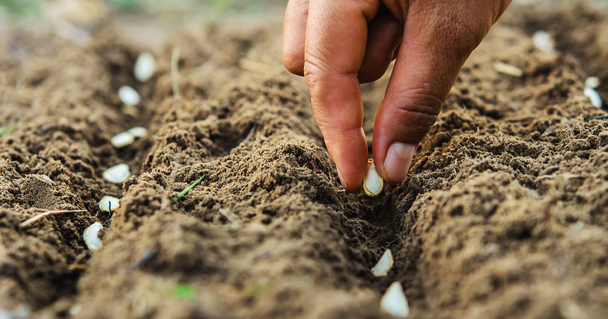 10 Simple Tips On How To Start A Vegetable Garden
