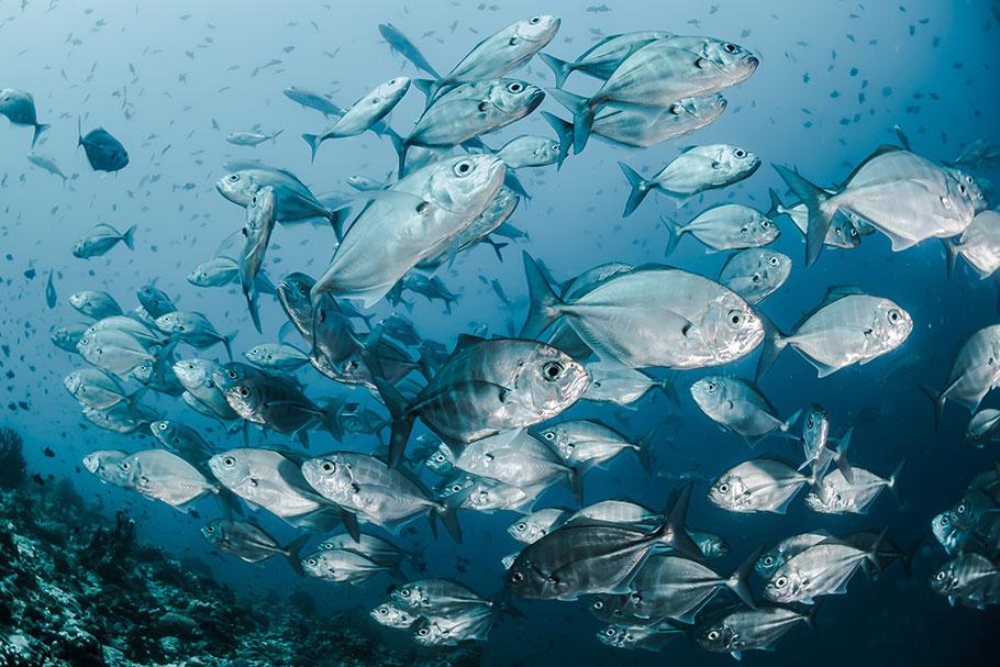 fish brain global warming affects