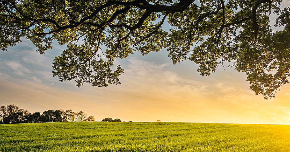 economy lockdown green recovery measures