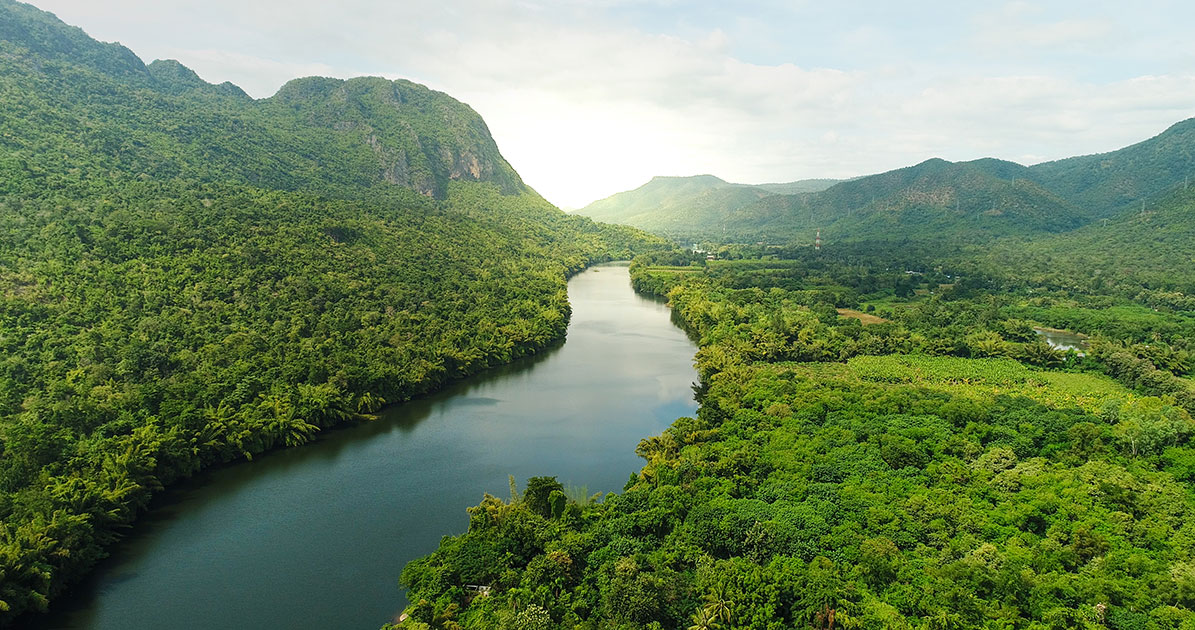 tropical forests store carbon