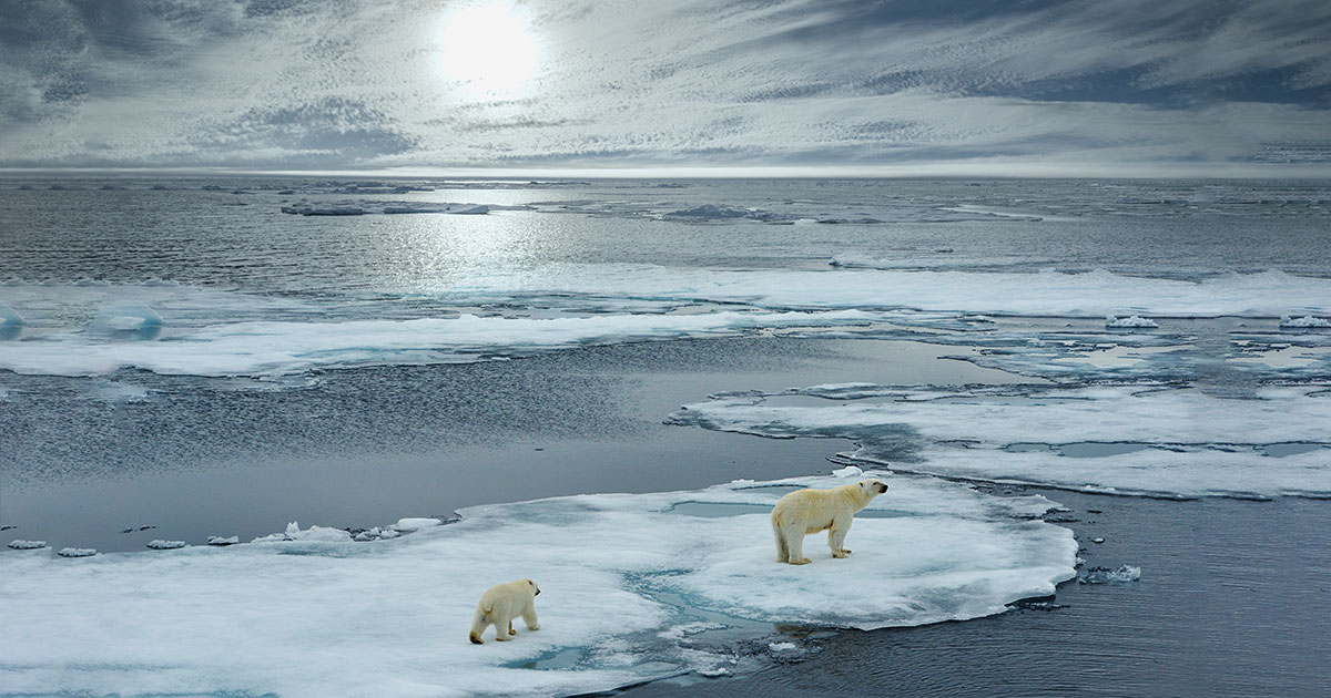 arctic ocean acidification increases