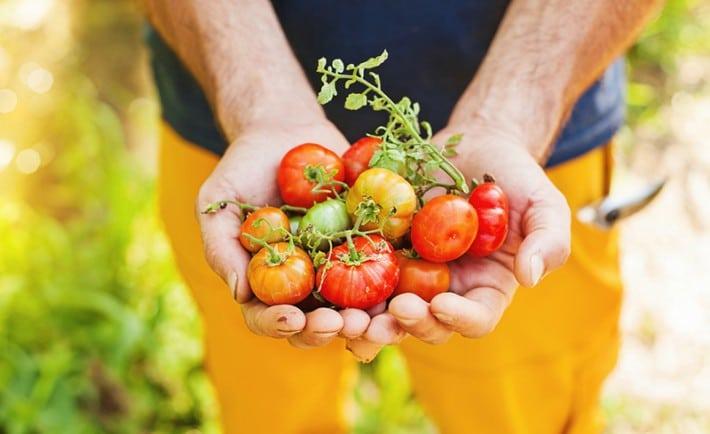 agro ecology permaculture sustainability