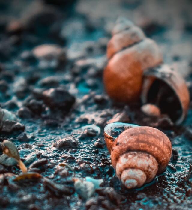 biodiversity loss collapse extinction