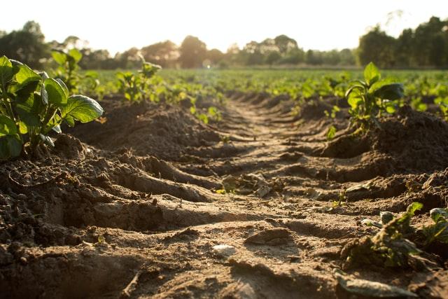 food system impact mitigation