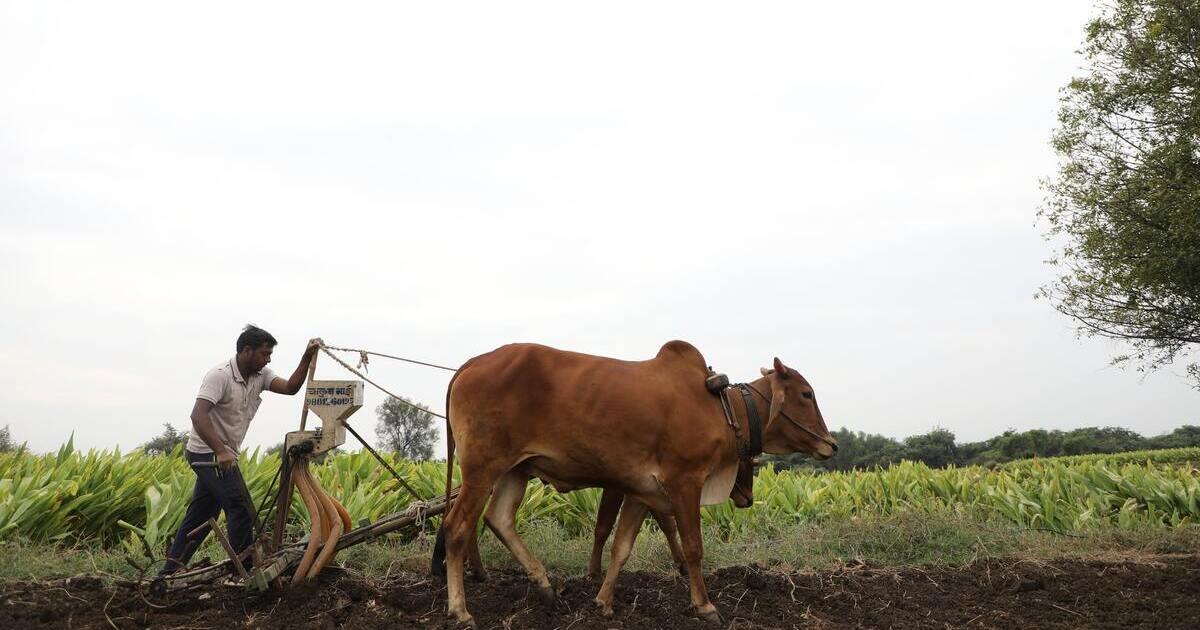 organic farming feed world