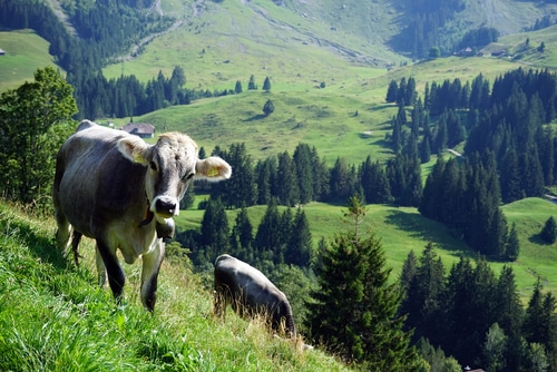 viande impact environnemental