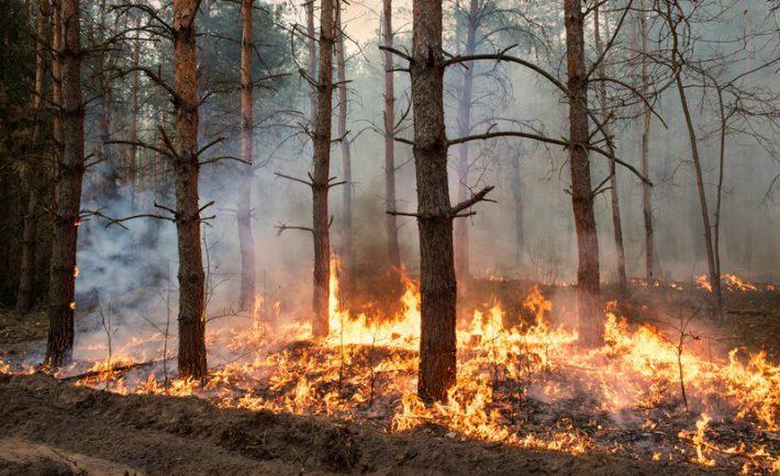 incendies feux de foret rechauffement climatique
