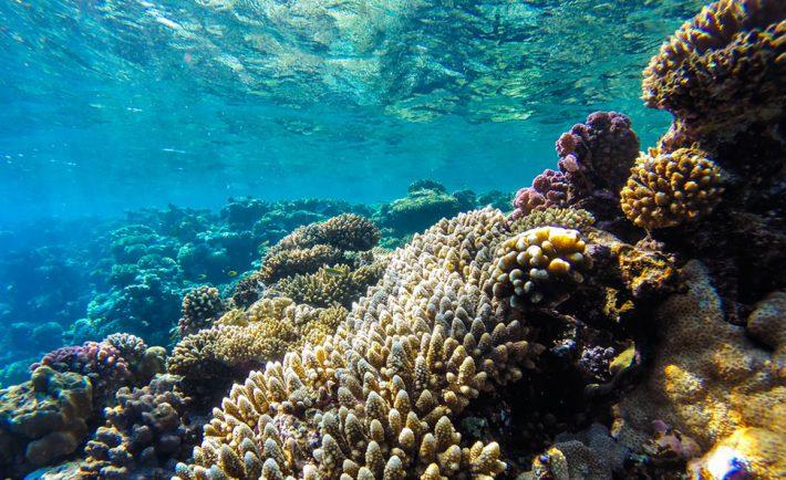 sauver-proteger-barriere-coraux
