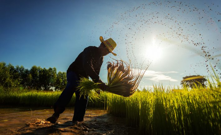 agriculture-pauvrete-liens
