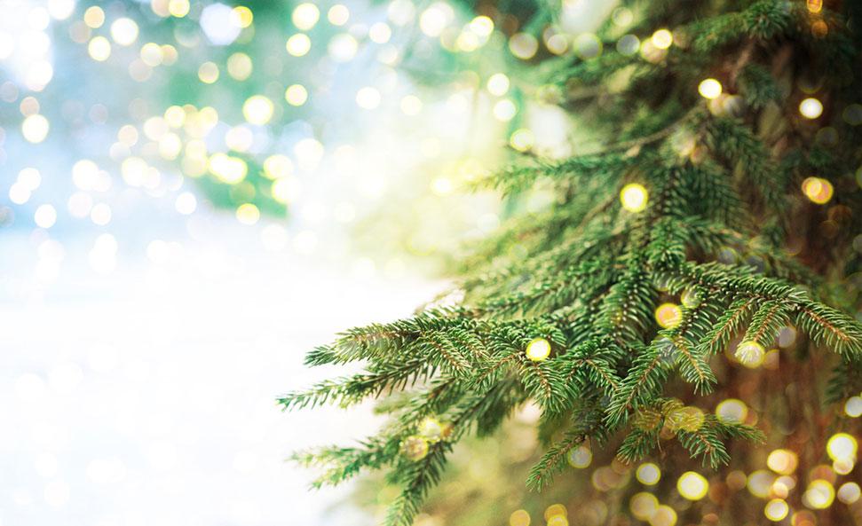 Comment Choisir Un Sapin De Noël Vraiment écologique