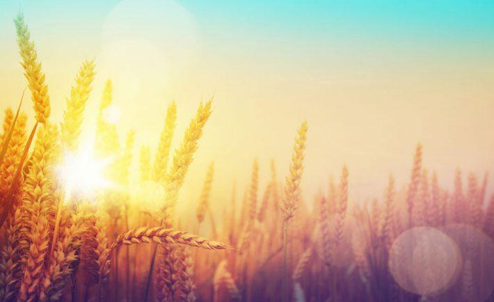 agriculture-changement-climatique-irrigation-secheresse