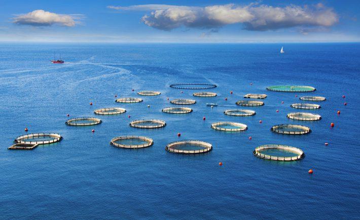 aquaculture-amti