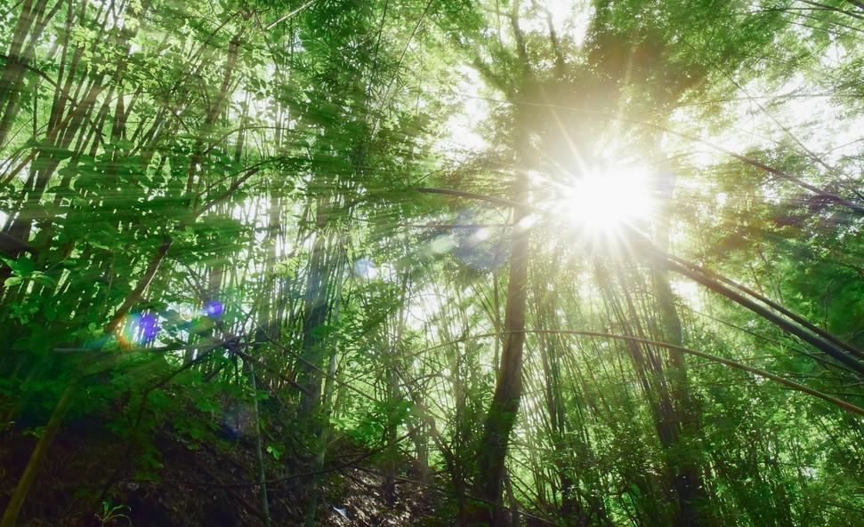 biodiversite disparition consequences