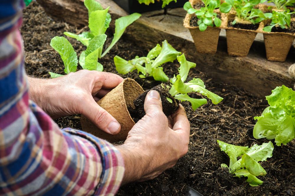 jardin ecologie impact environnemental