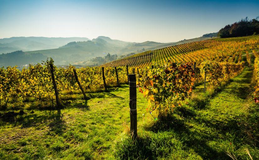 impact réchauffement climatique vin