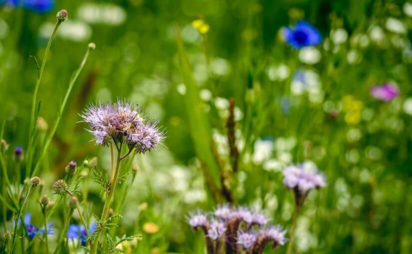 biodiversite economie