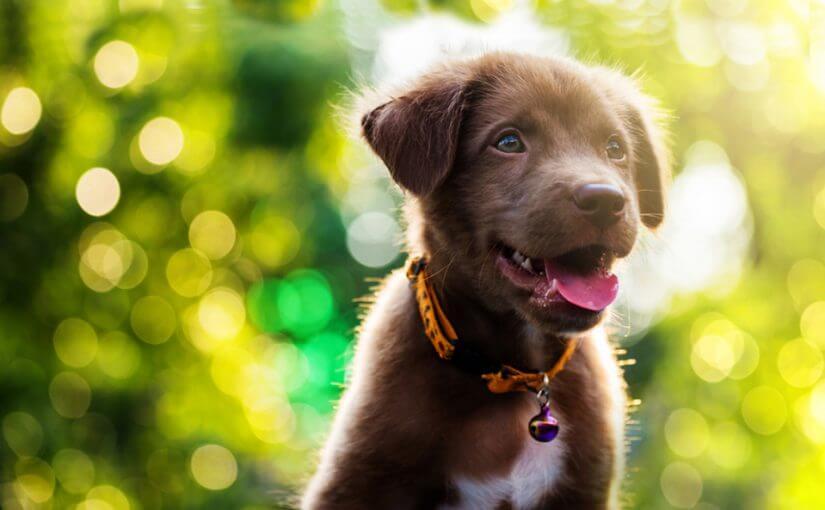 chien-animaux-domestiques-impact-environnement