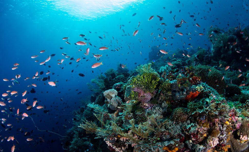 biodiversite ipbes 2019