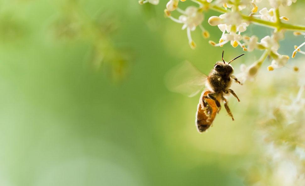 universite-abeille-guerlain-2019