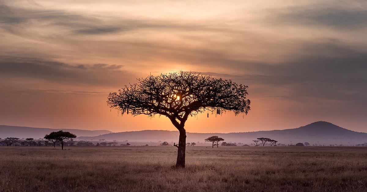 afrique developpement economique ecologie croissance