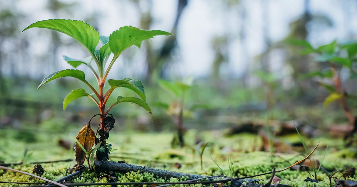 compensation ecologique efficace ou pas