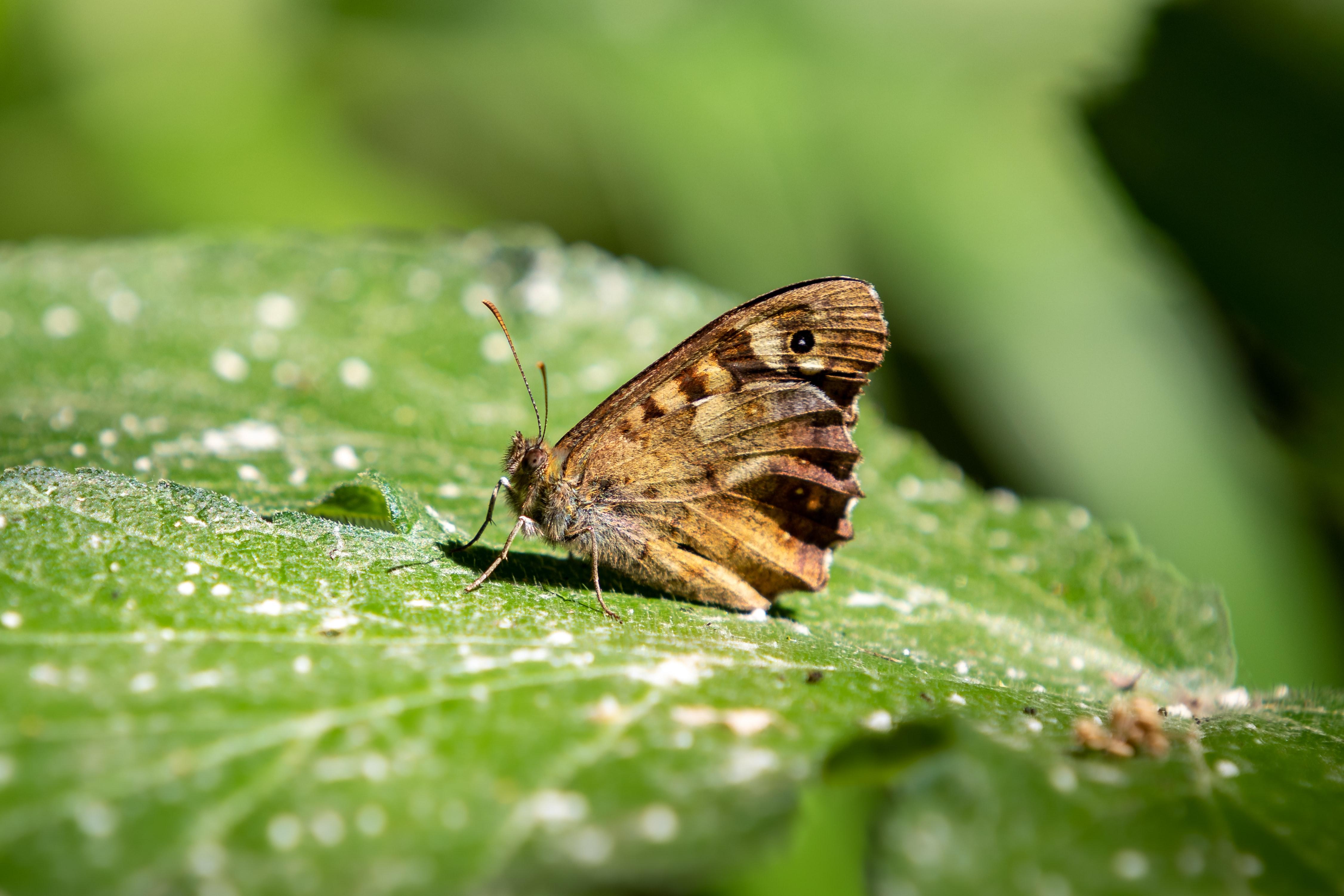 biodiversité et reporting RSE