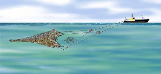 engin de pêche chalut pélagique