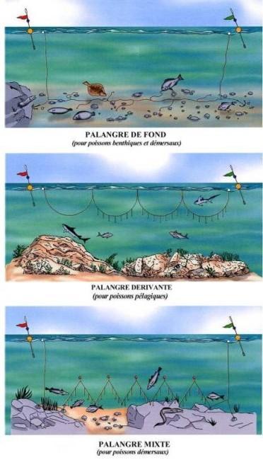 engin de pêche palangre
