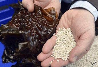 Algopack, les algues deviennent du plastique