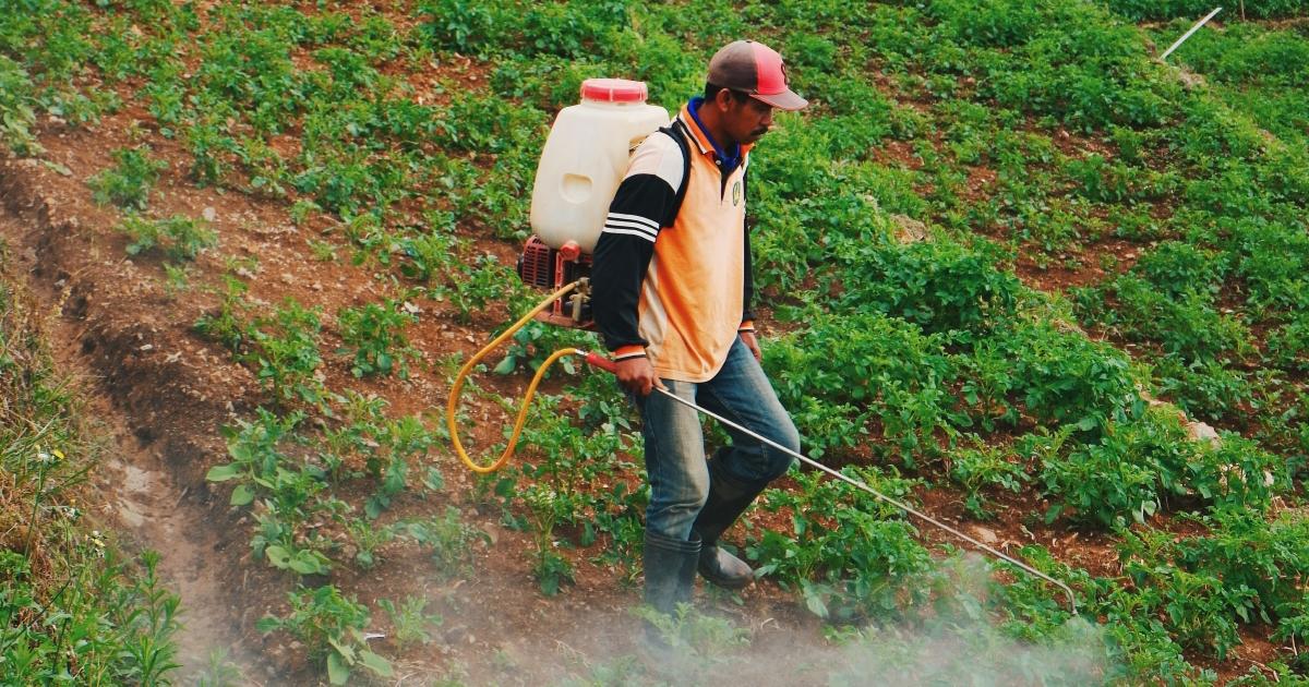 agriculteur pulvérisant des pesticides sur un champ