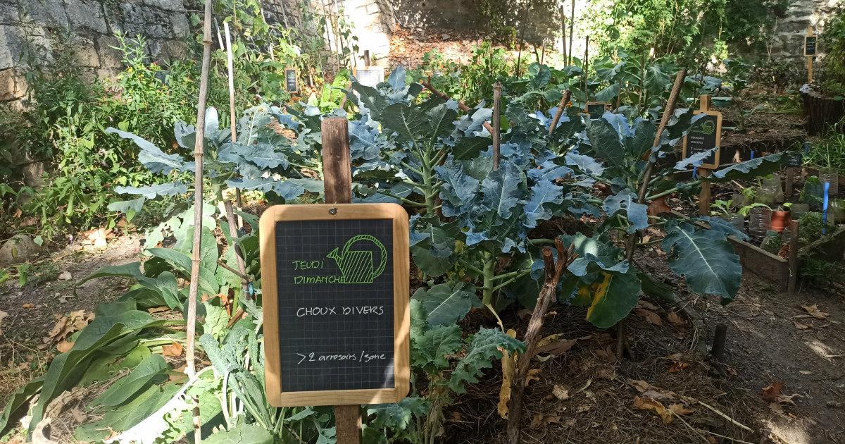 agriculture urbaine jardin partagé