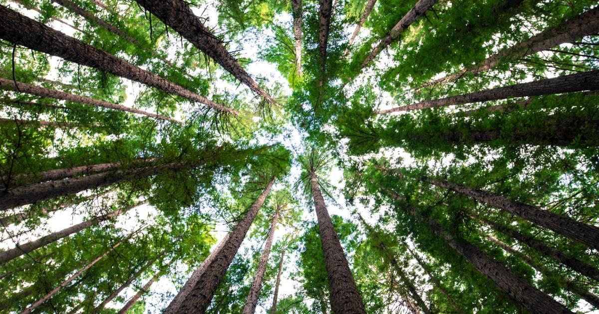 reforestation entreprise compensation arbres