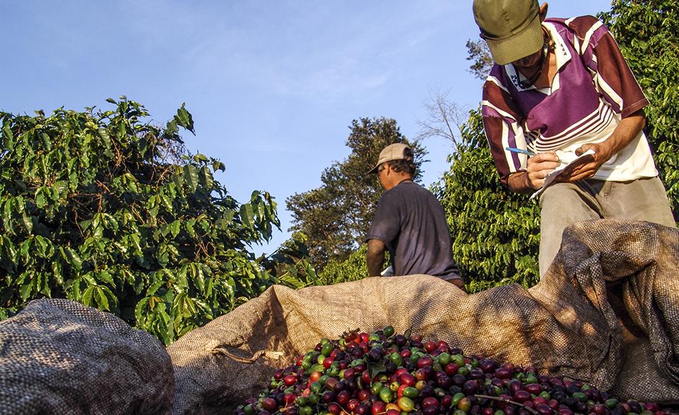 Nespresso et Fairtrade, un partenariat en faveur d'un café plus respectueux des producteurs et de l'environnement